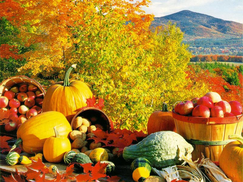 http://www.dietsinreview.com/diet_column/wp-content/uploads/2008/09/fall.jpg