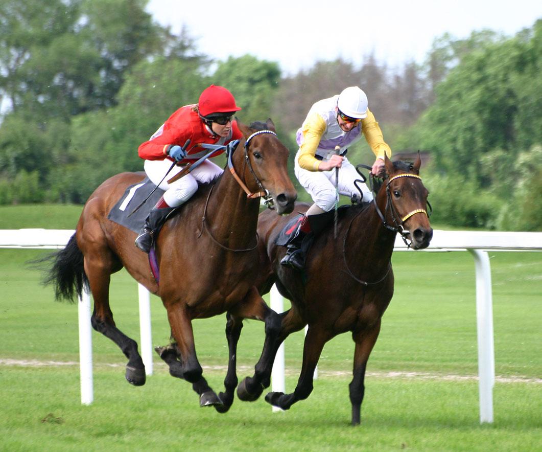 horse-racing.jpg (1061×884)