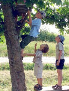 boys-climbing-tree