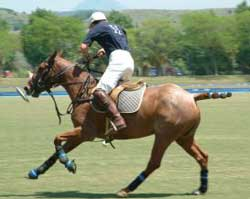 polo player riding horse