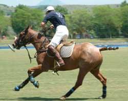 polo player riding horse