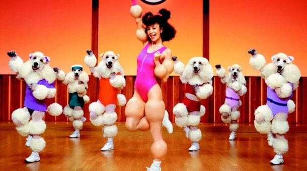 poodle human workout