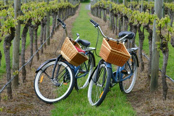 wine bikes