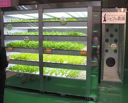 japan vending lettuce