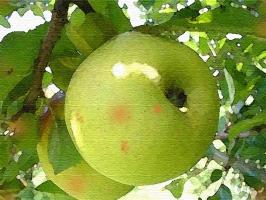 Apple Oat Bake Photo
