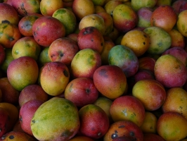Honeyed Mangoes Photo