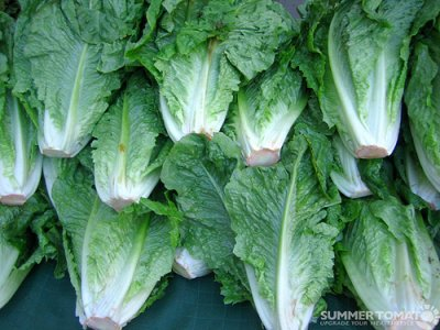 Romaine, Leafy Green