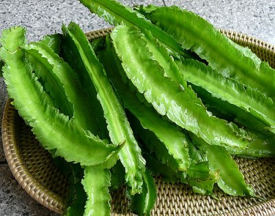 Winged bean leaves, raw
