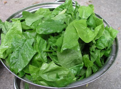 Spinach,Leaf