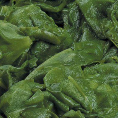 Cut Leaf Spinach