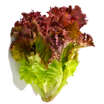 Organic, Lettuce, Red, Leaf