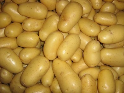 Potato, Yellow