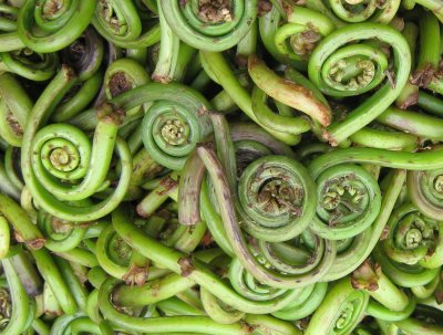 Fiddlehead ferns, frozen, unprepared