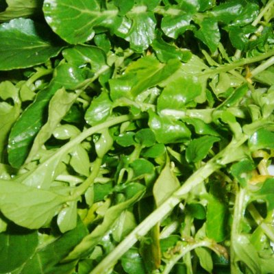 Organic, Watercress