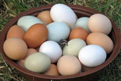 All Natural Organic Eggs