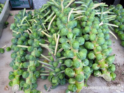 Brussels Sprouts, Stalk