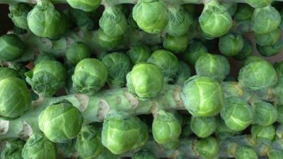 Organic, Brussels Sprouts, Stalk