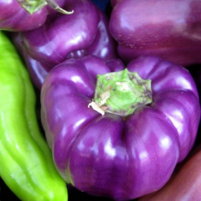 Peppers, Bell, Greenhouse, Purple
