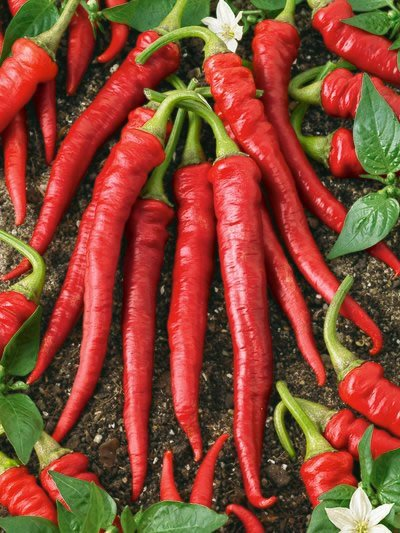 Peppers, Long, Hot, Red