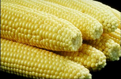 Yellow Sweet Corn, Naturally Sweet
