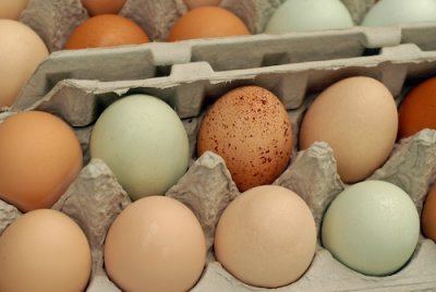 Free Range Brown Large Eggs