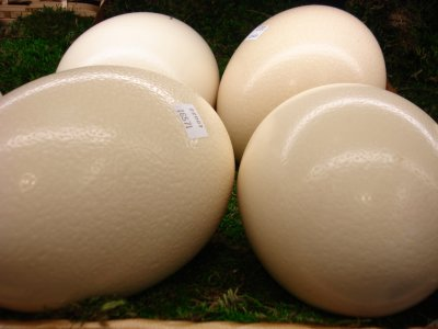 Large Grade AA Eggs
