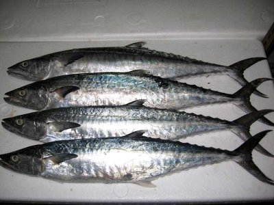 Fish, mackerel, king, raw