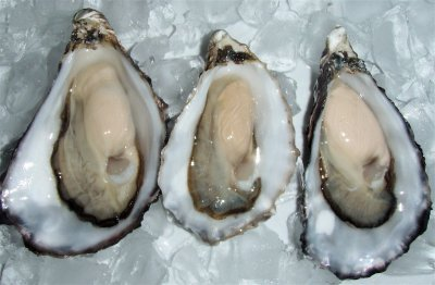 Oyster,Pacific
