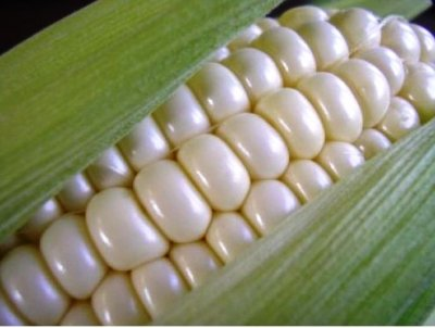 Corn, Sweet White