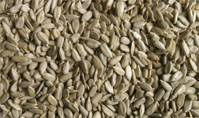 Sunflower Seeds, Salted, 1 Pounder