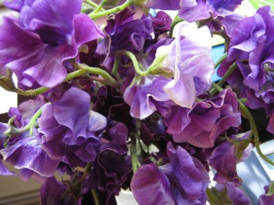 Sweet Peas - Whole