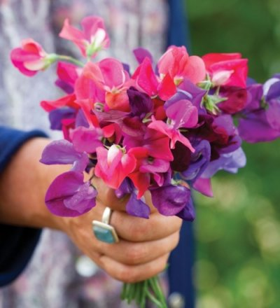 Sweet Peas, Mixed Sizes