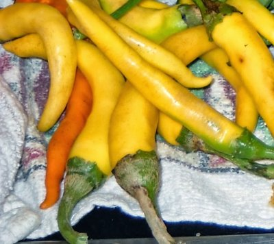 Organic, Peppers, Chili, Yellow