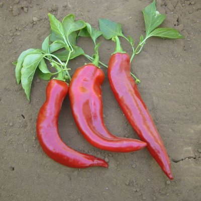Organic, Peppers, New Mexico