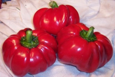 Peppers, Red, Pimiento /  Red, Sweet, Long