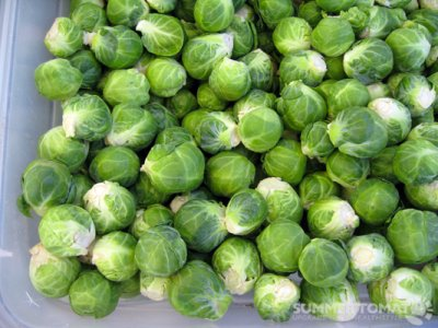Baby Brussels Sprouts, Singles