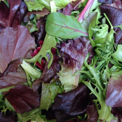 Spring Mix, with Herbs, Organic