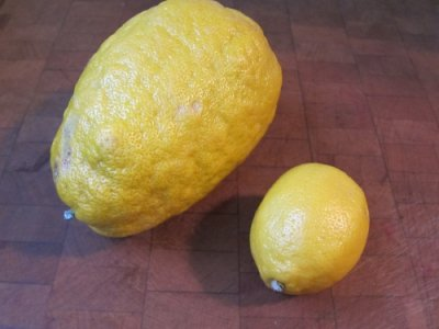 Lemon, Large