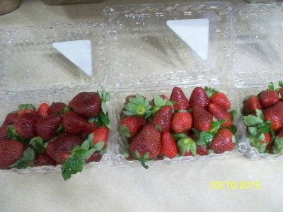 Berries, Strawberries, Quart