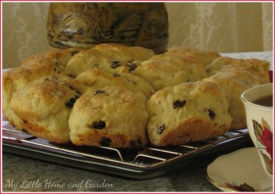 Tea Biscuit-Raisin