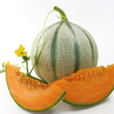 Melon, Charentais, Small