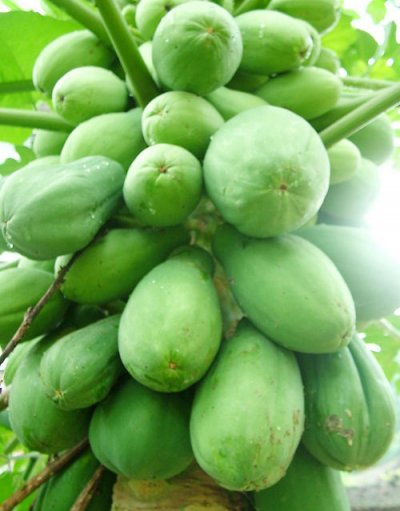 Organic, Papaya / Pawpaw, Retailer Assigned