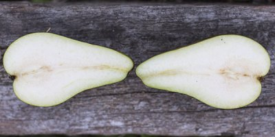 Pear, Conference