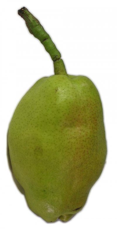 Pear, Fragrant