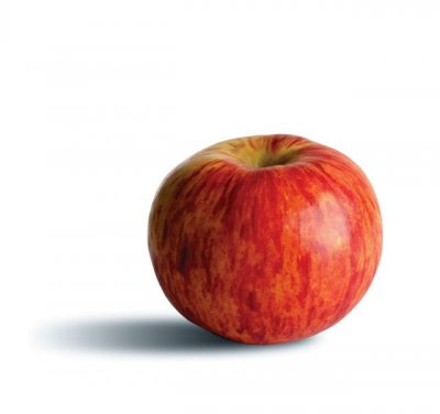 Apple, Gravenstein, Large