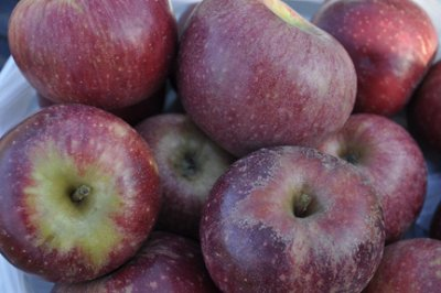 Apple, Winesap, Large