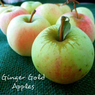 Organic, Apple, Ginger, Gold, Large