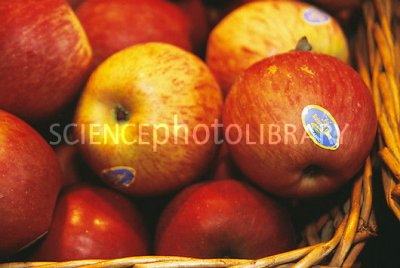 Organic, Apple, Jonamac, Large