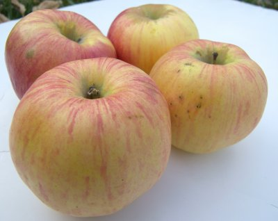 Organic, Apple, Northern, Spy