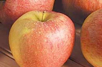 Apple, Scifresh, Small